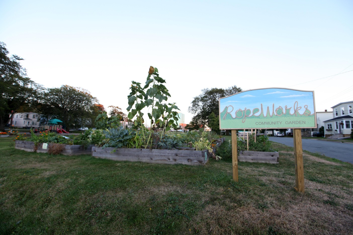 It's been a successful growing season for members of the Ropeworks Community Garden in Victoria Park. Photo: Megan Hirons Mahon