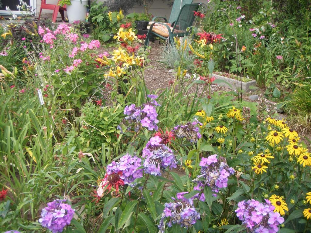 Debbie Symonds' garden is a riot of colour