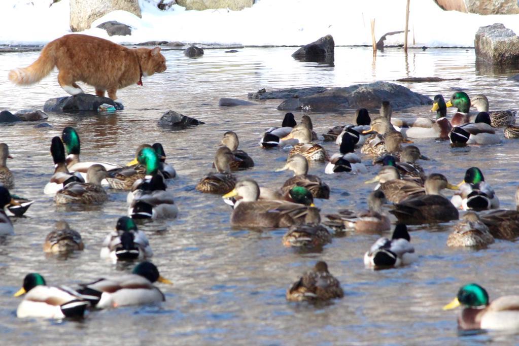 Something is fishy at Sullivan's pond!